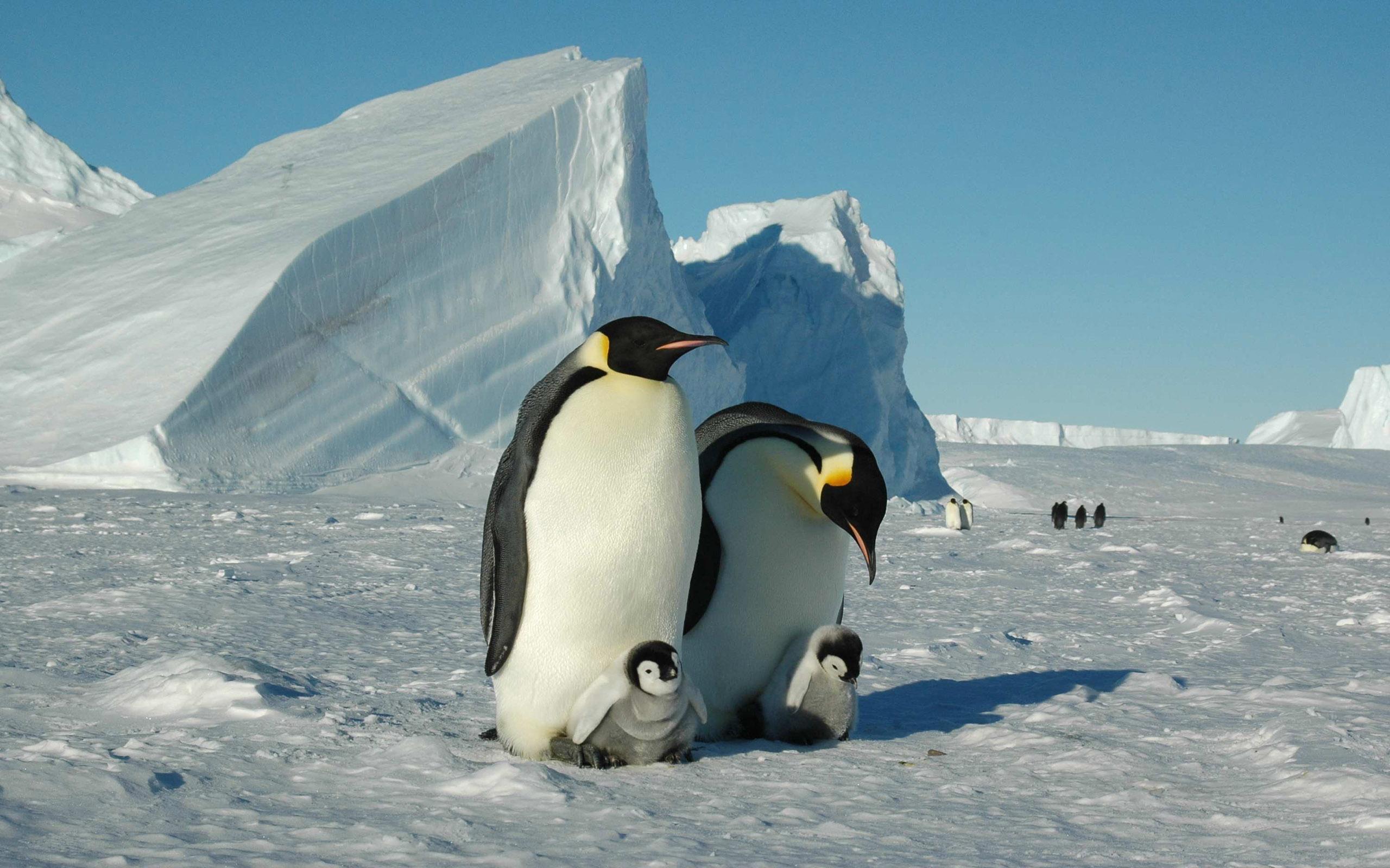 Inneres der Antarktis (per Flug)
