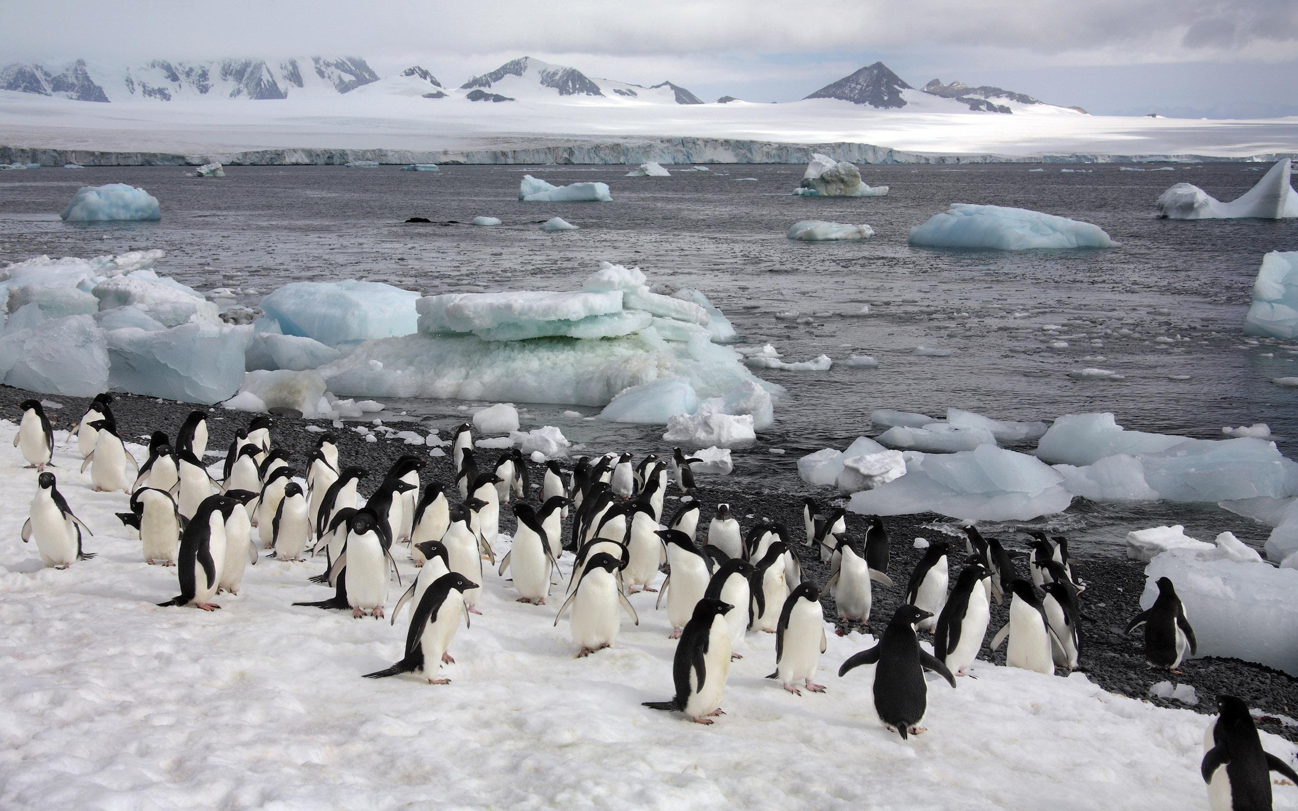 Antarktische Halbinsel - Südshetland Inseln