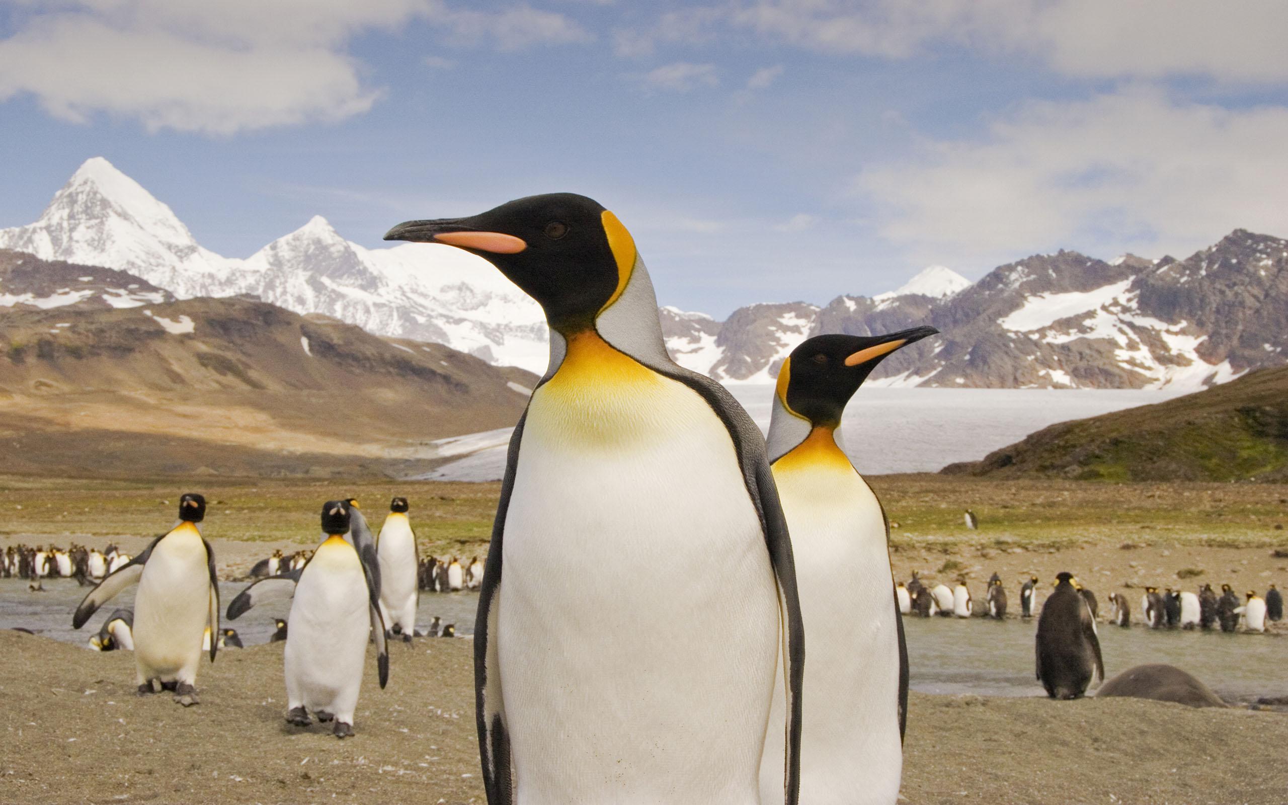 Antarktische Halbinsel mit Südgeorgien und Falklandinseln