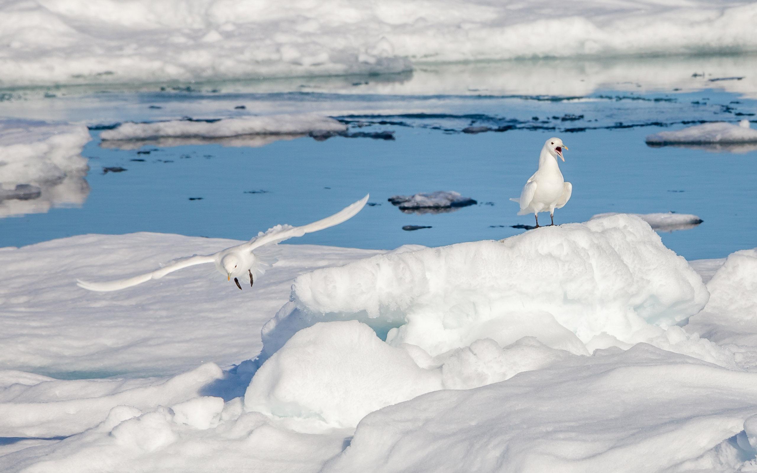 Umrundung des arktischen Ozeans