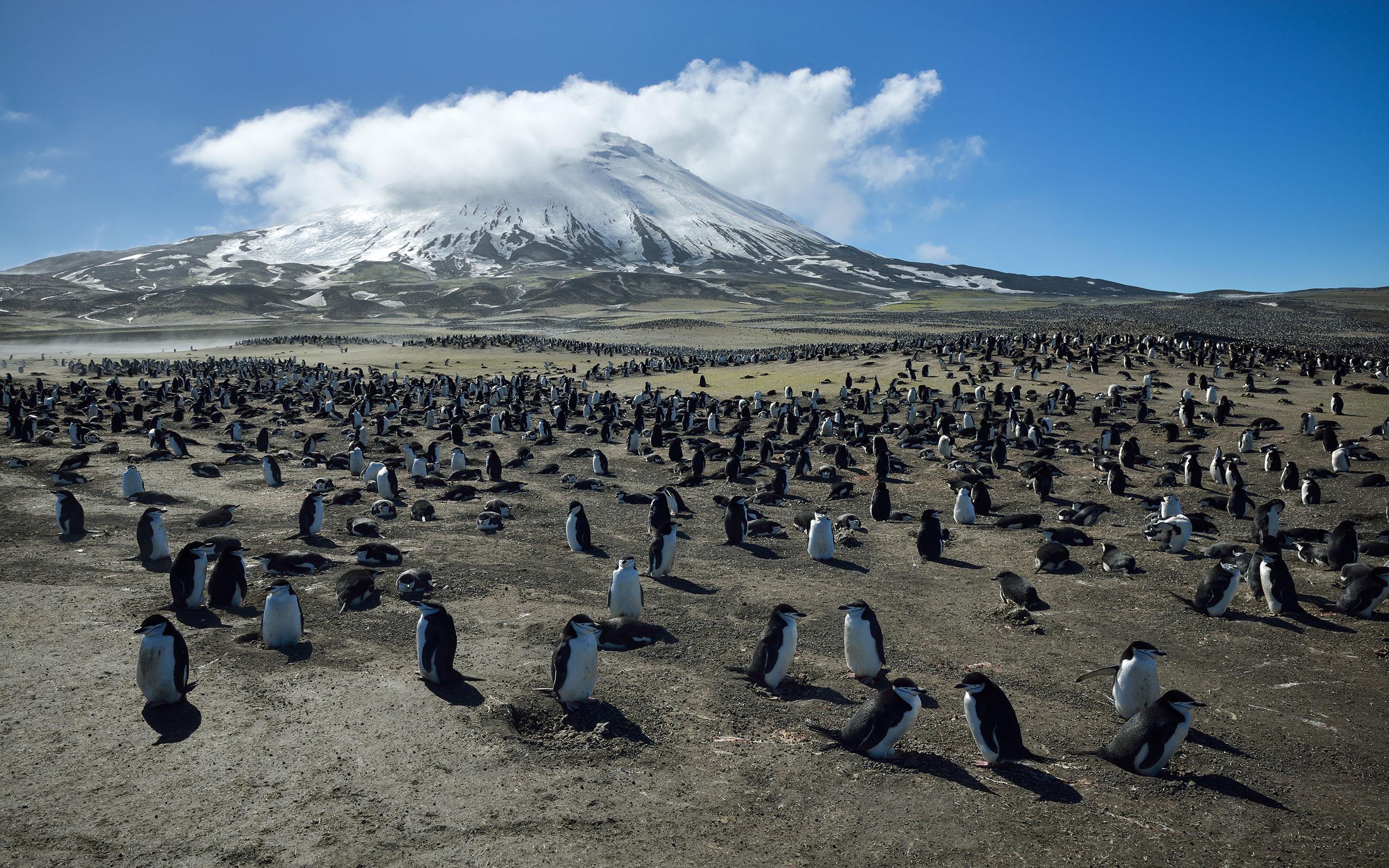 atlantische subantarktische Inseln (Bouvet Insel, südliche Orkneyinseln, südliche Sandwichinseln)