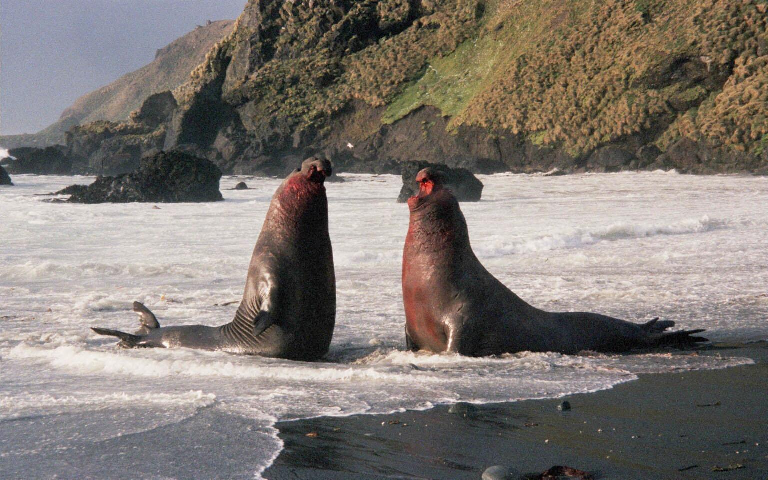 australisch-neuseeländische subantarktische Inseln (Macquarieinsel, Snares Inseln, Campbell Insel, Auckland Inseln)