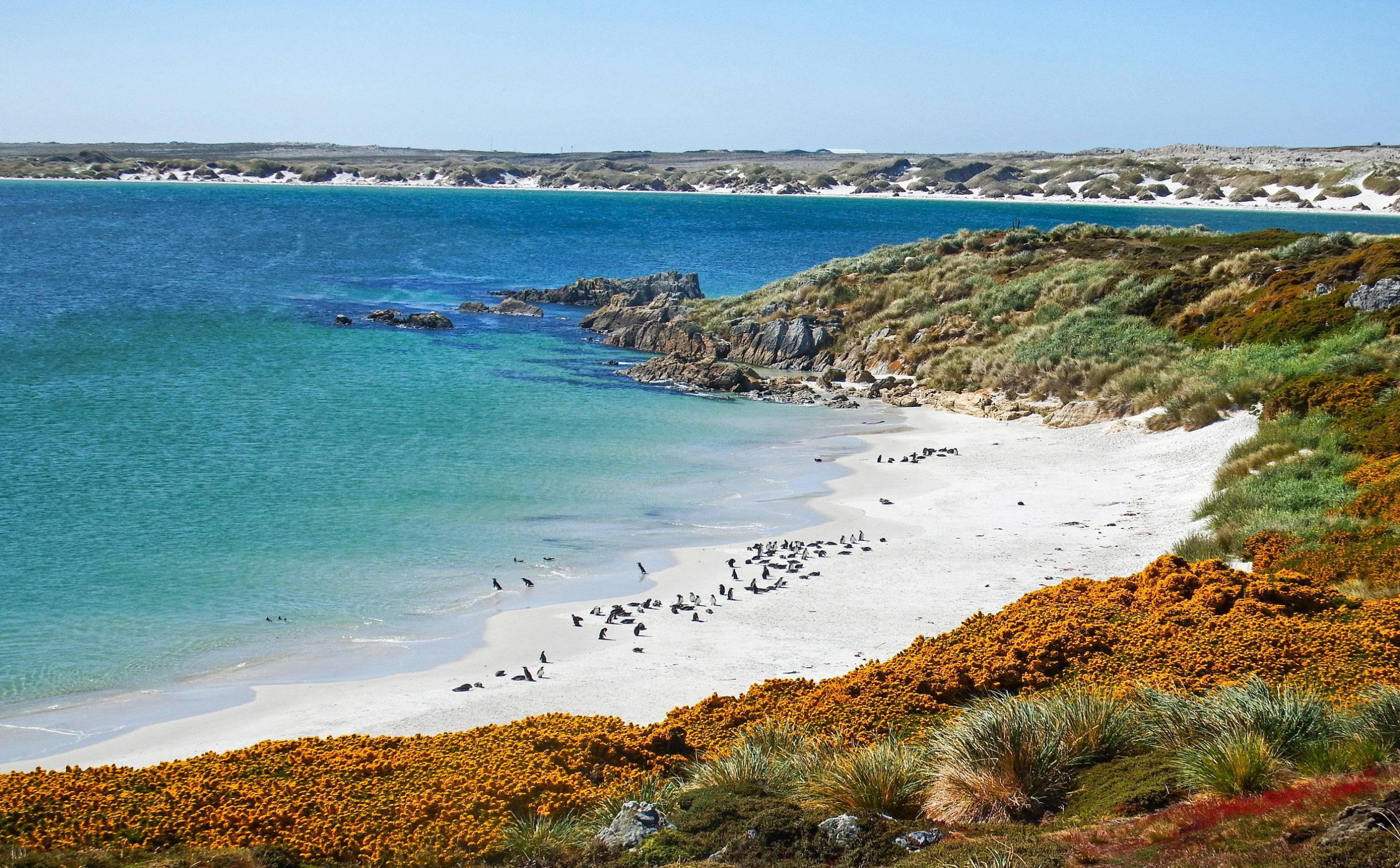 nur Falklandinseln