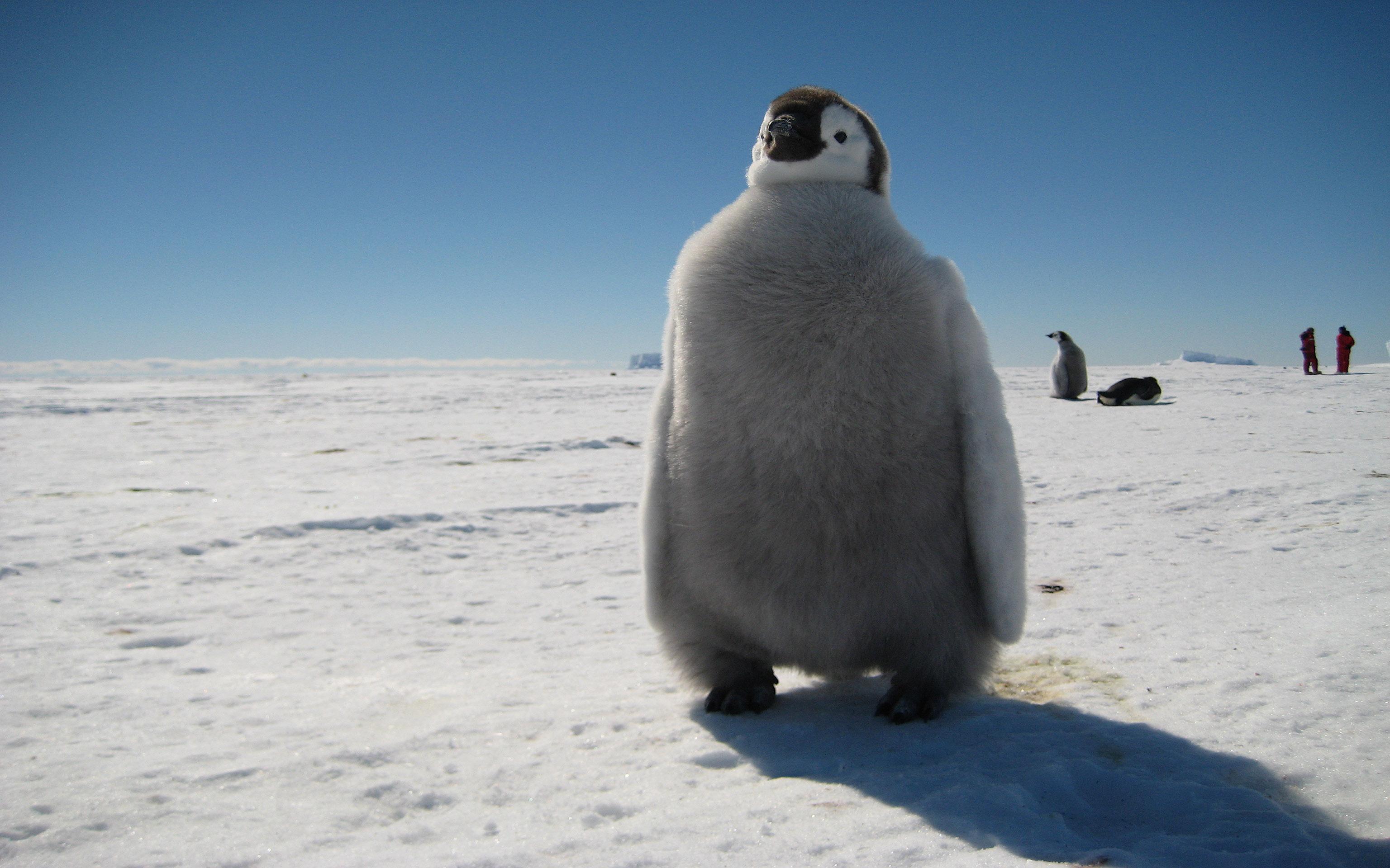 Innere Antarktis - Kaiserpinguinbeobachtung