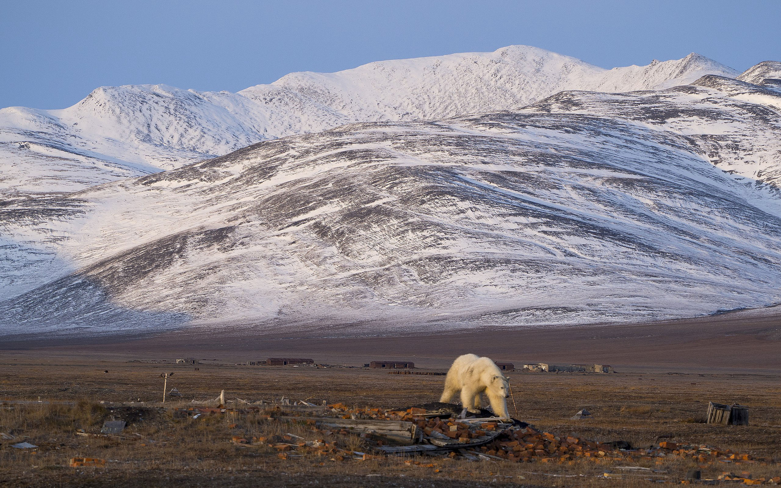 russische Arktis-östlich (Wrangel Insel, Tschuktschen Halbinsel, Neusibirische Inseln)